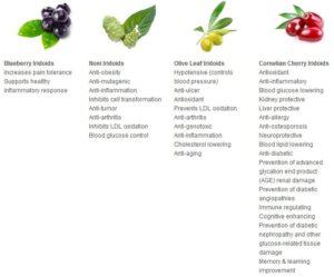 Buah - buahan penyusun produk herbal Jus tahitian noni