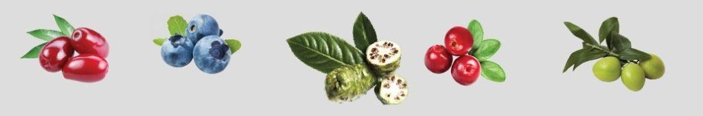 buah-buahan-penyusun-Jus-Tahitian-Noni